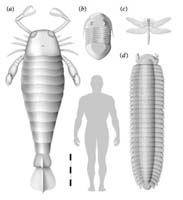 Fossil of largest insect on record found