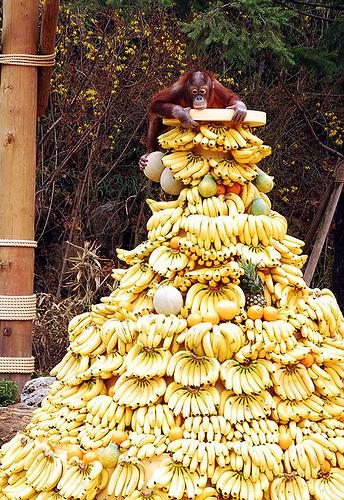 Banana's from heaven