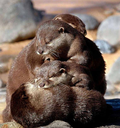 A cuddle huddle