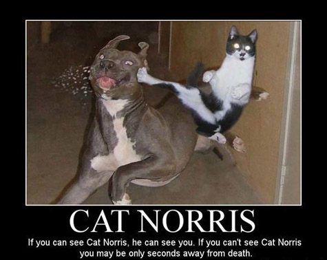 Keep your dogs away from THIS cat!