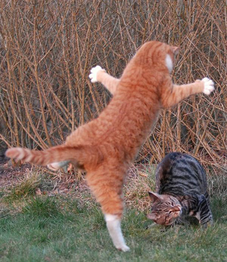 Attack of the ginger Cat!