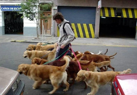 now that's a dog walker