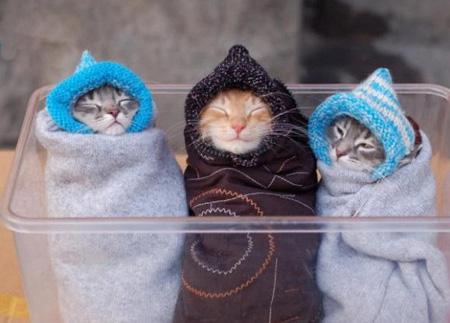 Bundled Kitties