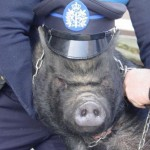 Pig dressed as a cop? Ironic