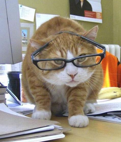 Studious Feline